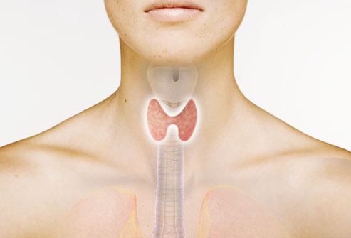 11webmd_rf_photo_of_thyroid_composite