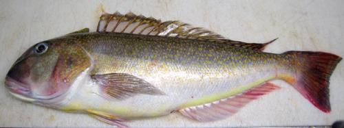fish7.gif