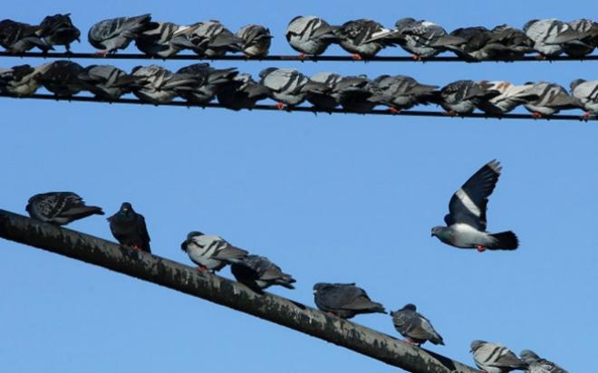 birds.medium.jpg